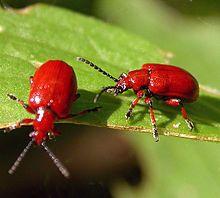 Deze insecten wil ik ook na gaan maken.