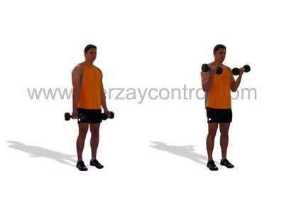 Los ejercicios más efectivos para el desarrollo de la fuerza del bíceps braquial son aquellos cuya acción principal es la flexión del codo.