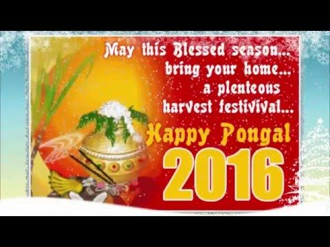 Happy pongal 2016 Messages | Happy pongal 2016 Latest Wishes/SMS/Greetin...