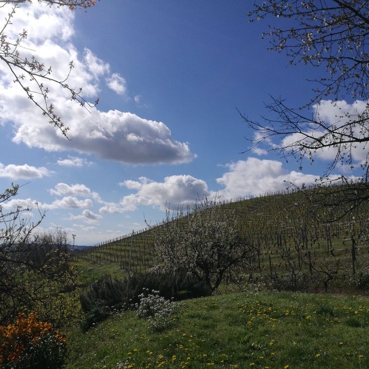 Semplicemente #spring #fratelliaimasso #instalanghetti #ig_cuneo #ig_piemonte #paesaggidivini #nofilters #loves_united_cuneo #cool #langhe #langheunesco #unesco #instawine #wine #igerslanghe
