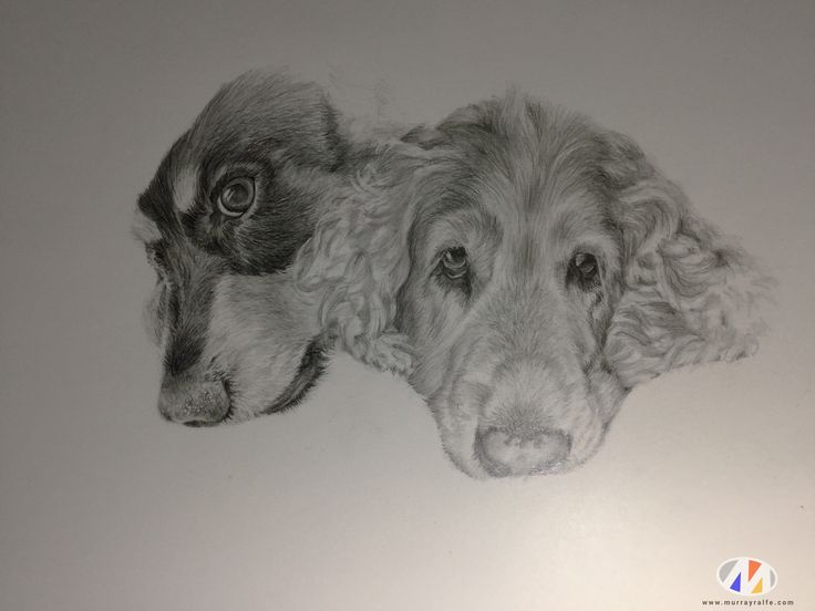 Two Dogs pencil drawing by Murray Ralfe
