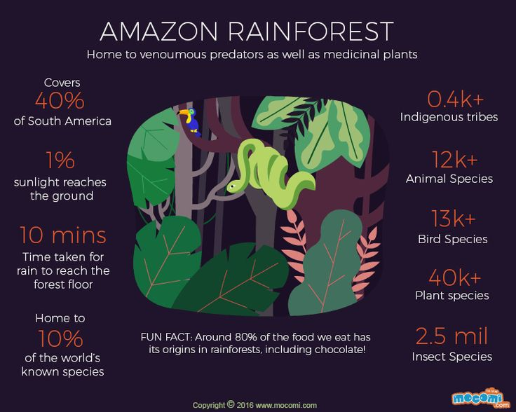 The Amazon Rainforest is the largest tropical rainforest on earth. Read here facts about the Amazon Rainforest #GIF More educational #GifographicforKids. http://mocomi.com/learn/new-world/