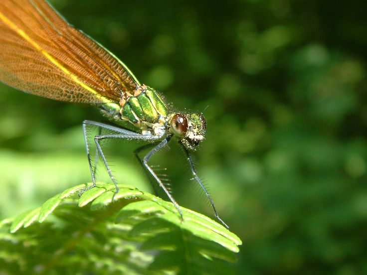 Dragonfly, Smile, Insect, Bug, Eyes, Green