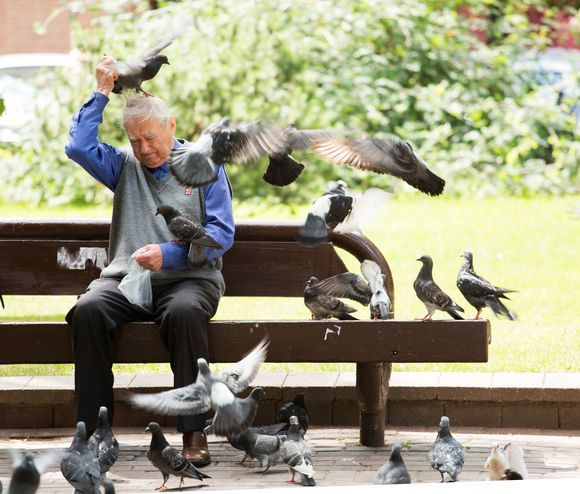 Old man and doves