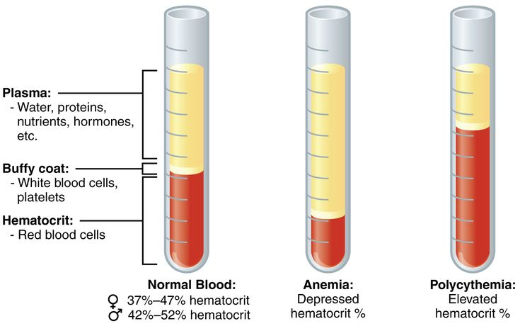 Blood tests & lab analysis: How it works and what you need to know. | Precision Nutrition