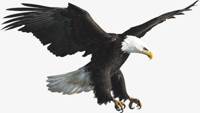 Eagle Voar O Ceu Imagem Png E Psd Para Download Gratuito Png Voar Como Aguia Voar
