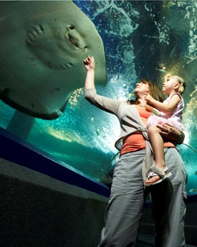 Go to the Aquarium - Underwater World! #airnzsunshine
