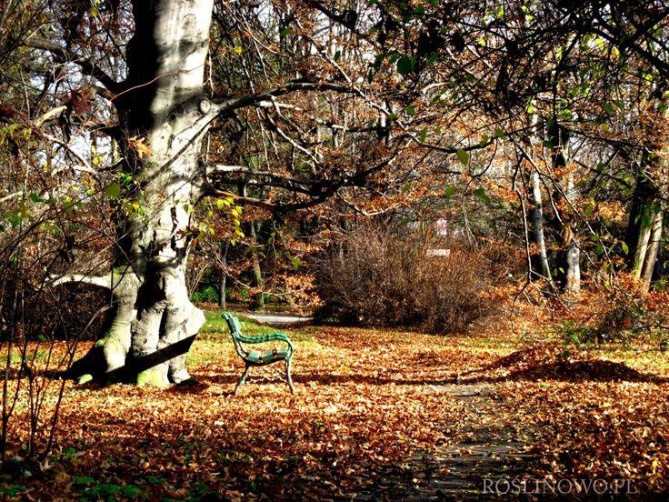 ławka pod bukiem jesienną porą