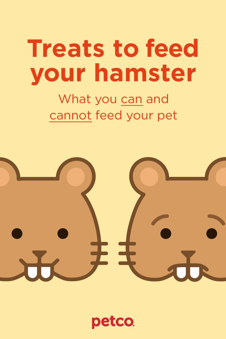Treats For Your Hamster Hamster Petco Your Pet