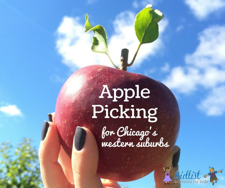 Apple Picking: U-Pick Near Chicago - kidlist • activities for kids