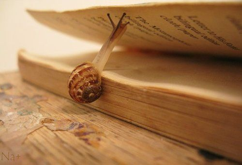 His favorite book.: Books Worms, Animal Photography, Books Worth, Books Books, Reading Books, Books Snails, Slow Readers, Good Books, Reading Slowly