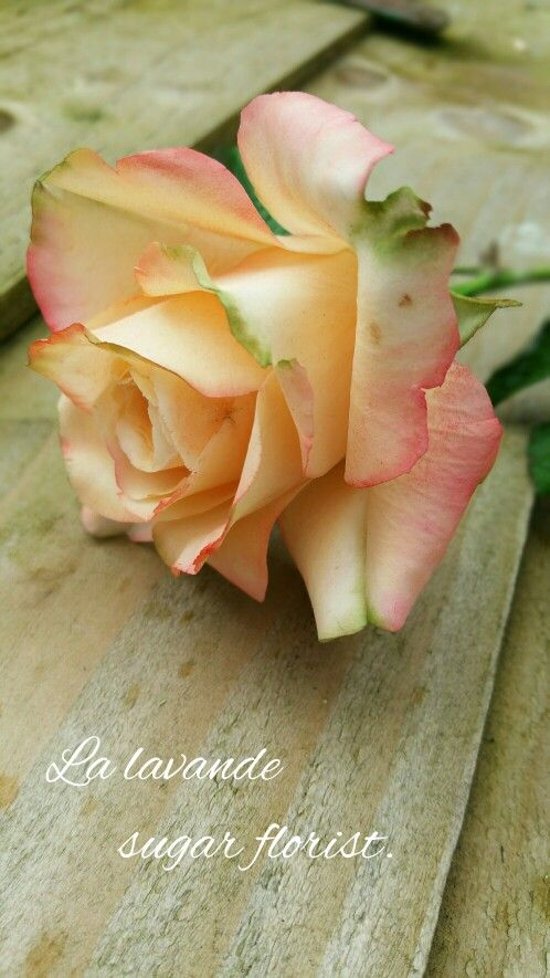 Sugar rose by La lavande sugar florist.