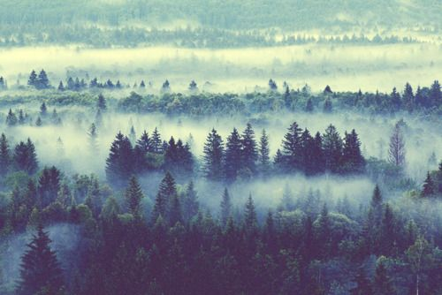 : Foggy Forests, Mists, Wood, Misty Forests, Trees, Cloud, Pine, Landscape, Natural