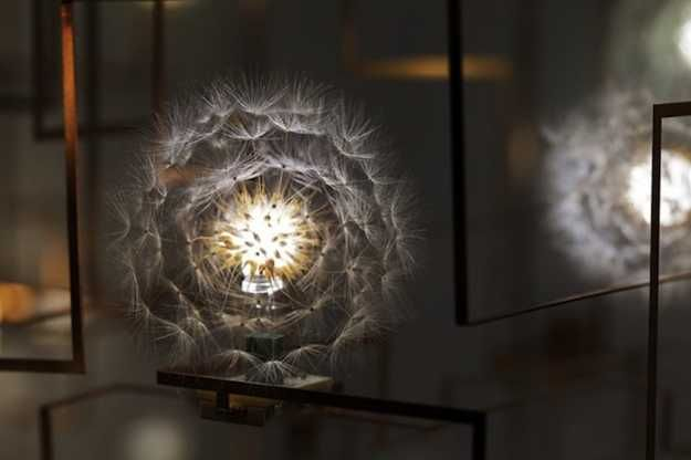 These modern lighting fixtures are beautiful, tender and innovative, blending functionality with creative design ideas inspired by dandelion seeds. The lighting fixtures look beautiful and unique, o