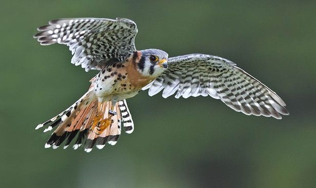 Good Free Of Charge Birds Of Prey Names Strategies For A Wild Birds Associated Birds Charge Free Go In 2020 Wild Birds Birds Of Prey Wild Birds Unlimited