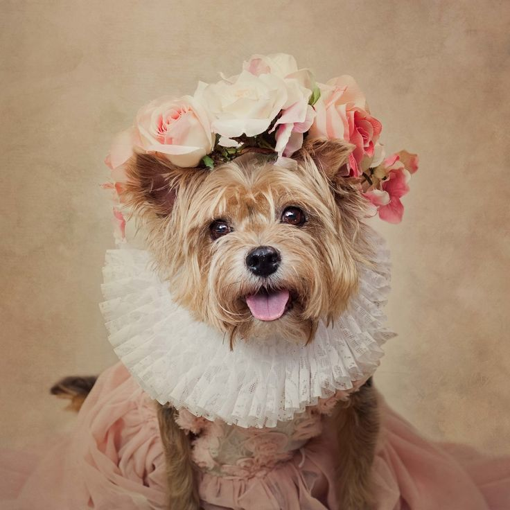 Using Fashion And Photography To Increase The Adoption Of Rescue Animals
