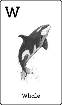Animal 4D+ Whale