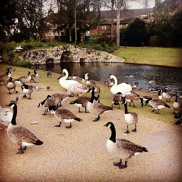 Come And Visit Our Wonderful Array Of Wildlife At Valentines Park!  #Redbridge #essex