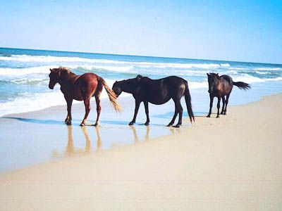 Emerald Isle, NC - Shackleford Wild Horses