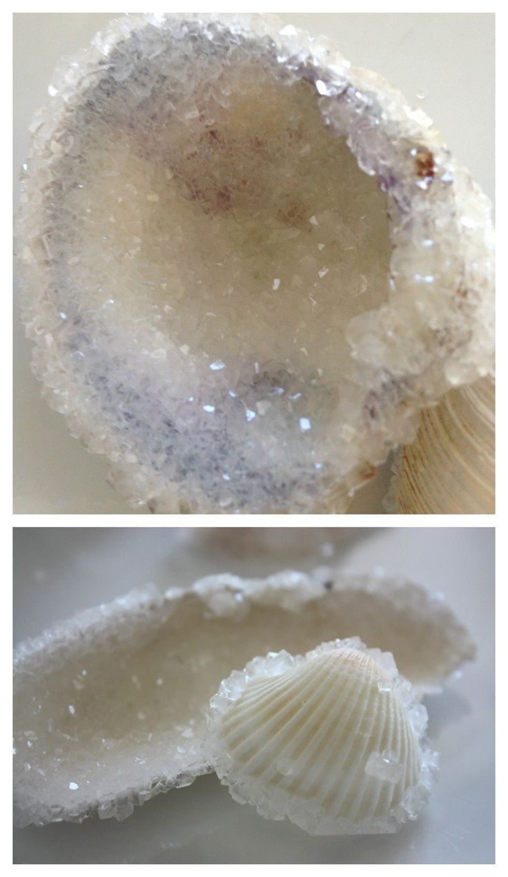 Crystal seashells borax crystal growing beach ocean science