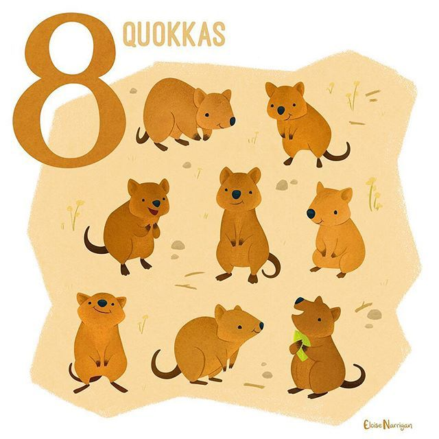 Eight quokkas! These guys are smaller members of the same family as kangaroos and wallabies Macropodidae named for their big feet. Also apparently they have a reputation for being really dumb but are like average-smart. Ill attribute that to jealousy over their good looks --- #someanimalsofaustralia #quokka #quokkasofinstagram #marsupialsofinstagram #anothermarsupial #australianfauna #australiananimals #australia #series #countingseries #digitalart #vectorart #kylebrush #animalart…