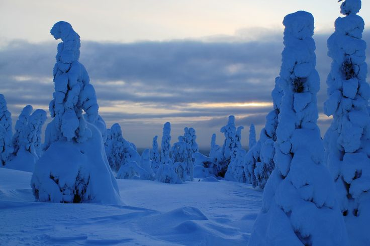 Snowtrees in the National Park Syöte, Taivalkoski, Lapland, Finland