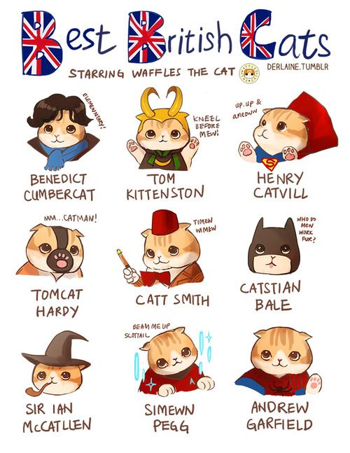 British Cats, including Henry Catvill (Superman), Catstian Bale (The Batman), and Andrew Garfield (Spiderman)