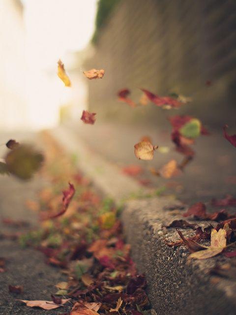 autumn leaves, falling