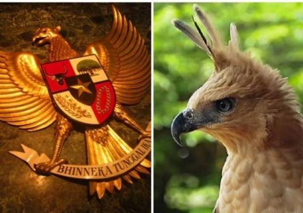 Elang Jawa, Burung Luar Biasa Simbol Garuda Pancasila