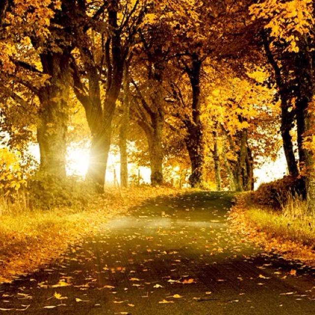 A lovely li path