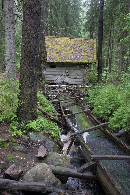 Hiking in Seitseminen National Park - Finland - HikeVentures