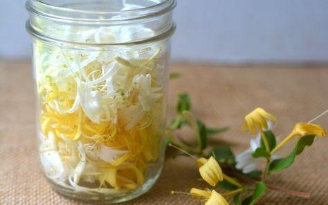 Mierea cu flori de caprifoi e un deliciu și un medicament pentru zilele grele în care suntem chinuiți de răceală și gripă.