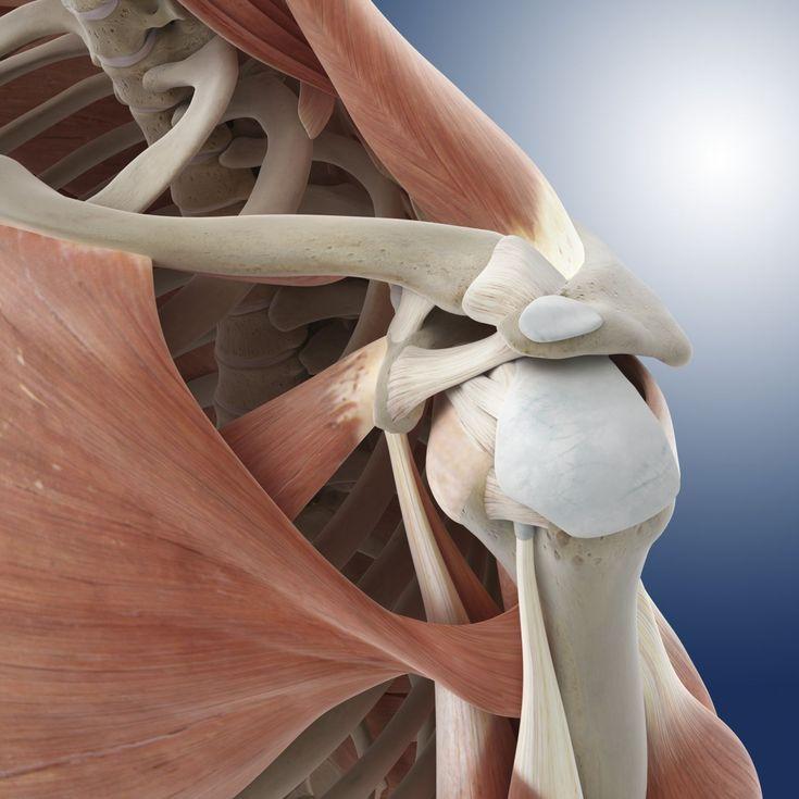 Understanding the Musculoskeletal System