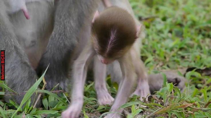 Anne ile bebek maymun
