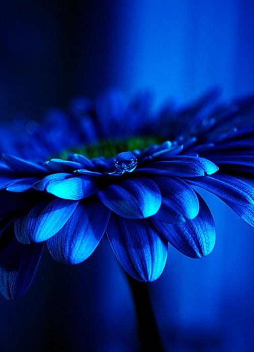 aliface-posts: (vía blue and beautiful | all things BLUE | Pinterest)