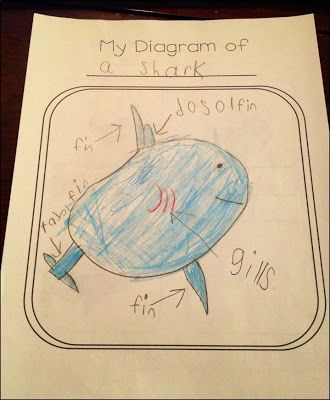 """My Diagram of a Shark! Students create their own """"All About Books"""" with non-fiction text features."""
