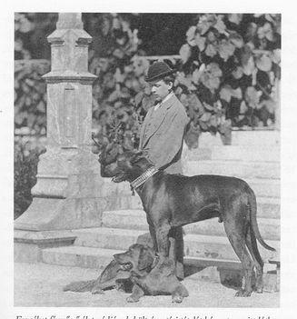 Boy looks after Elisabeth's dogs