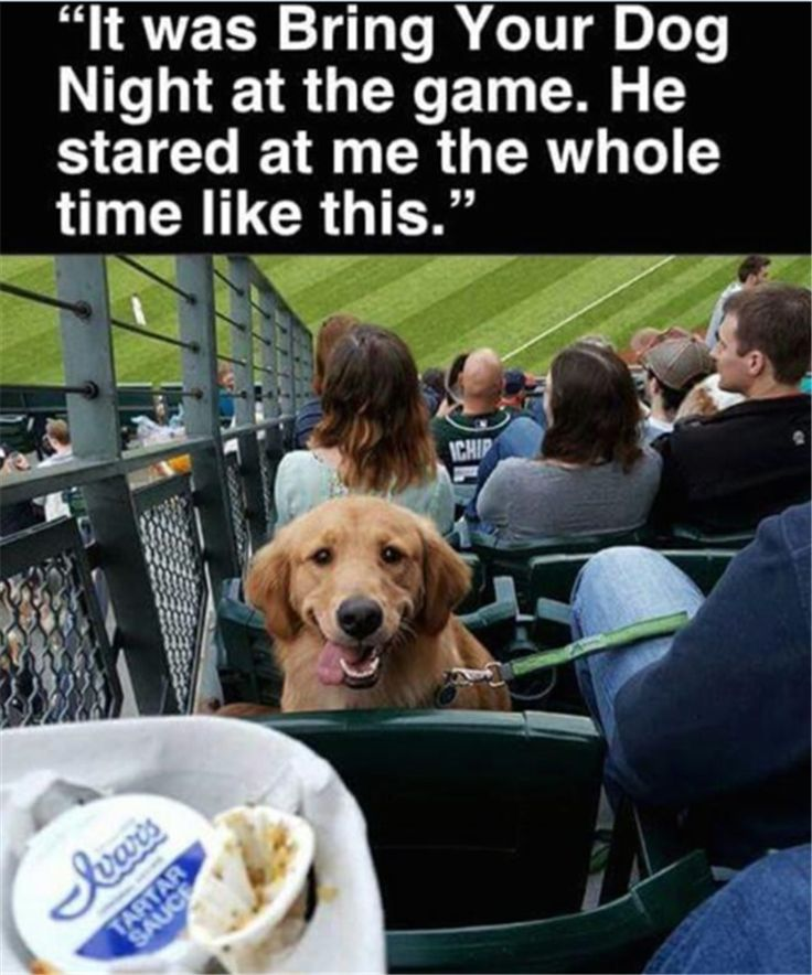 when you bring your dog to the game