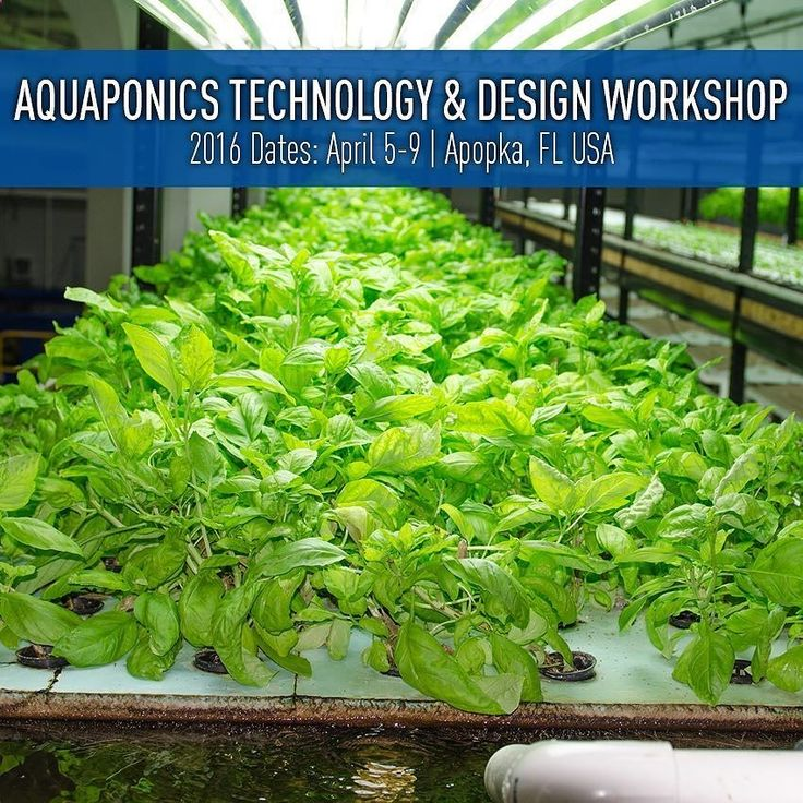 Aquaponics Workshop - April 5-9 | Apopka FL The Pentair Aquatic Eco-Systems Aquaponics Technology and Design Workshop is a 4.5-day workshop that covers every aspect of commercial aquaponics from system design to plant and fish production to marketing and economics. You'll get hands-on instruction from the Pentair AES team and some of the industry's most renowned experts. Registrations are running ahead of normal pace we are about 75% filled! Sign up here: ift.tt/1U2tZoJ Re-post by Hold...