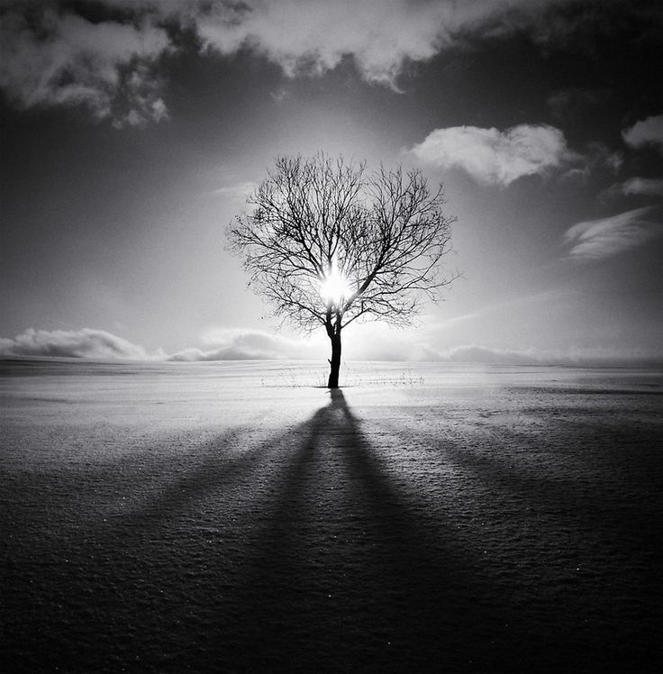 Edge of the world tree silhouette sun black and white