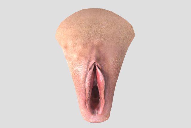 74 Bedste 3D-anatomi-billeder på Pinterest 3D-anatomi-8688