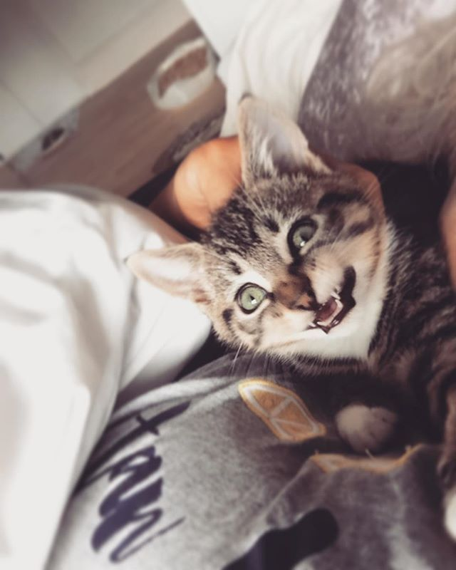 Pin By Funnel Eric Kass On Fur Purr Kittens Cutest Funny Cats Cat Day