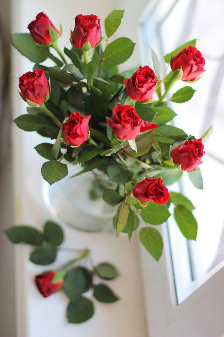.~red rose~.