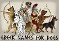 60 Male Greek Names That Make Cool Dog Names