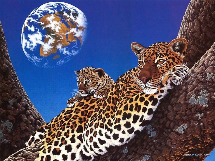 Красивые фотографии животных и млектопитающих. Фото клипарт - животные и звери. Картинки и рисунки