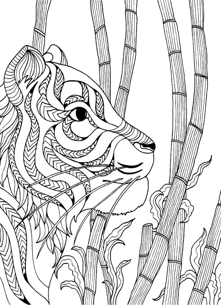 tiger adult colouring page colouring in sheets art craft art supplies i