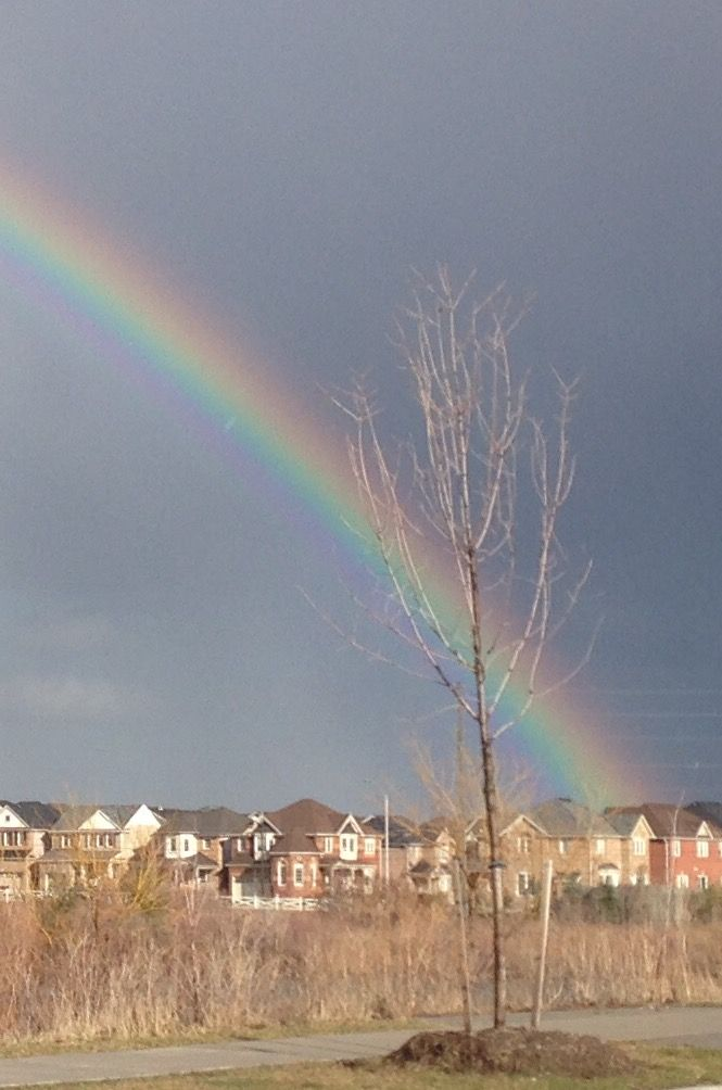 """""""Rainbow"""" Description: At a park close to home, a colorful moment Submitted by Isabel Palomino #MiltonON"""