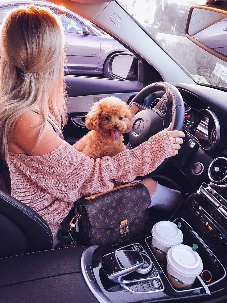 IG: @HayleyLarue   Maltipoo Puppy   Louis Vuitton Pochette Metis   Mercedes Benz