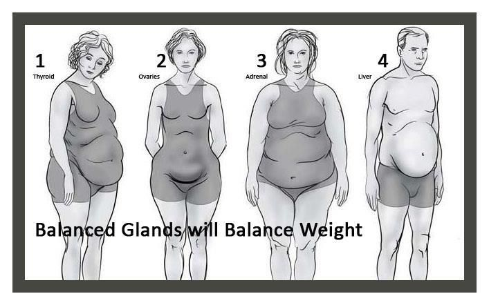 Balanced Glands will Balance Weight with Young Living Essential Oils:  1. Thyroid Shape: EndoFlex Blend and Myrtle Essential Oil nourish the Thyroid Gland.     2. Ovary Shape: Frankincense, Clary Sage, Progessence Plus Serum nourish the ovaries.    3. Adrenal Shape: Nutmeg and Clove have corticosteroid activity, and they can support the adrenals and help them to heal.    4. Liver Shape: A 5 day nutritive cleanse is recommended along with Juva Cleanse Blend Essential oil.