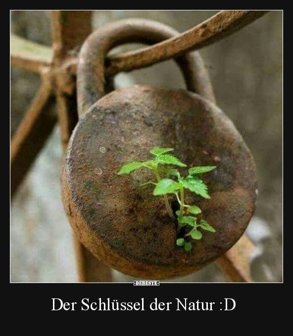 Der Schlüssel der Natur :D | Lustige Bilder, Sprüche, Witze, echt lustig